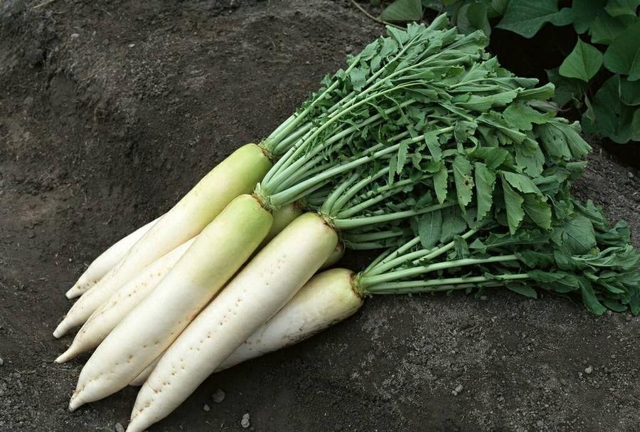蔬菜配送.jpg